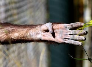 Parmaklıklar ardında özgürlük hayalleri: Hayvanat bahçeleri