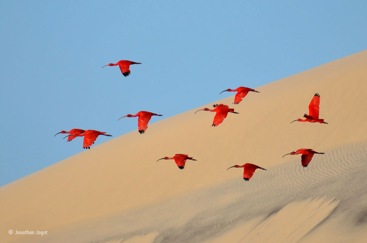 3-flight-of-the-scarlet-ibis