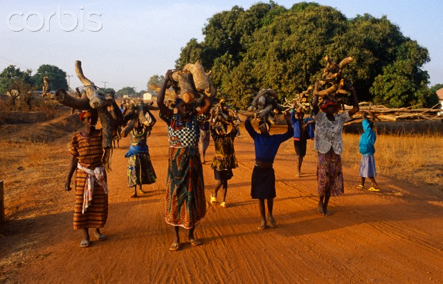 Ghana, Upper Western Region, Nakori. Villagers carrying firewood in Northern Ghana.