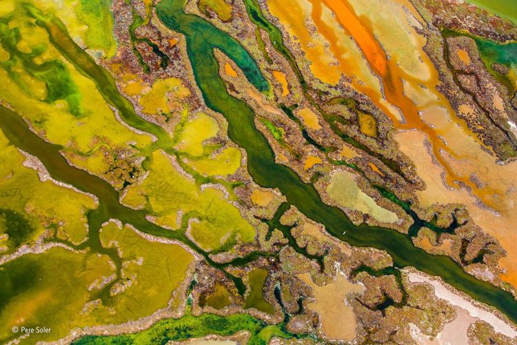 7-the-art-of-algae-from-the-sky-cat