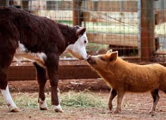 4 Ekim Hayvanları Koruma Günü: Veganlık, hayvan sömürüsü ve iklim değişikliği