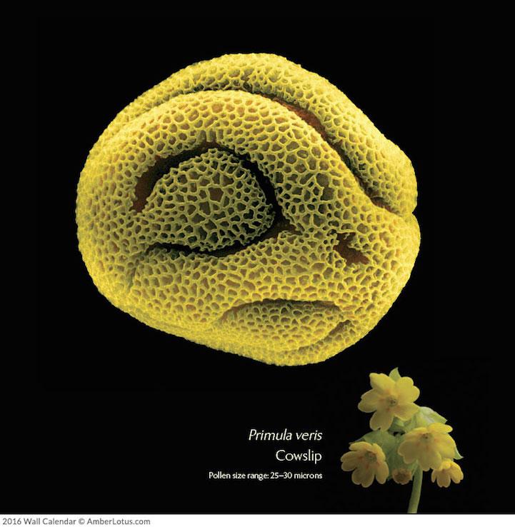 Mikrofotoğraflar bitkilerin harika ve bilinmeyen dünyasını açığa çıkarıyor 3