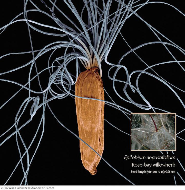 Mikrofotoğraflar bitkilerin harika ve bilinmeyen dünyasını açığa çıkarıyor 4