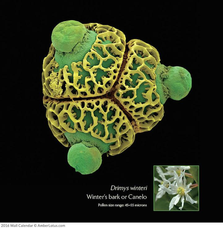 Mikrofotoğraflar bitkilerin harika ve bilinmeyen dünyasını açığa çıkarıyor 6