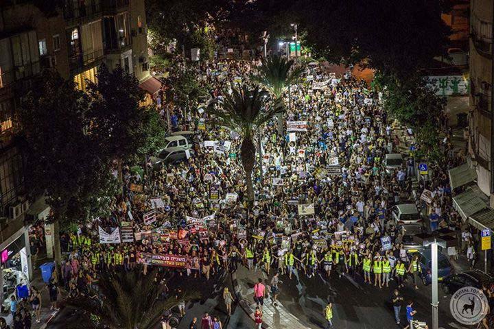 Ortadoğu'da en çok katılımlı hayvan haklaro protestosu 15 bin kişi ile yapıldı 4
