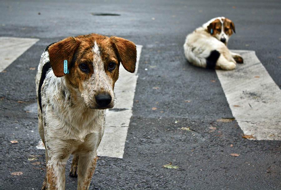 Sokak köpeği 333