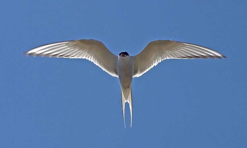 deniz kuşları için tehlike çanları çalıyor 1