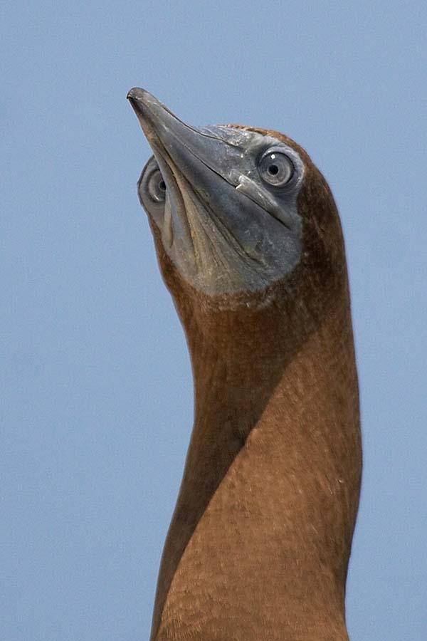 deniz kuşları için tehlike çanları çalıyor 2
