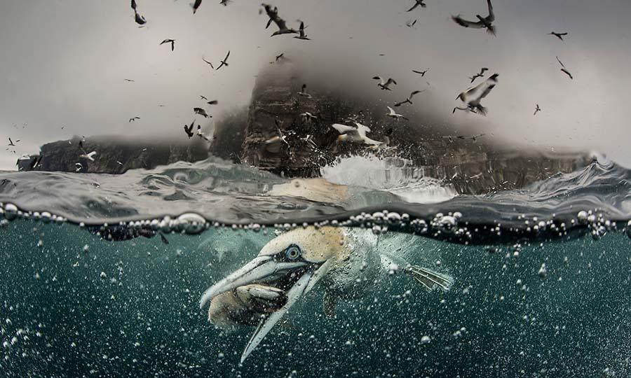 deniz kuşları için tehlike çanları çalıyor 4