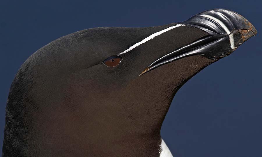 deniz kuşları için tehlike çanları çalıyor 8