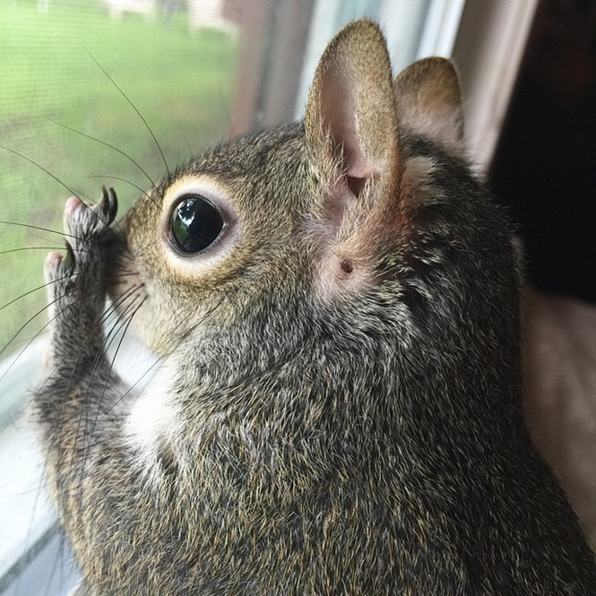 photogenic-rescue-squirrel-jill-72