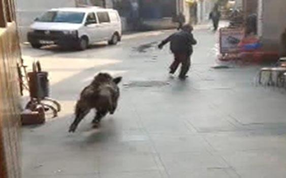 İstanbul Domuz