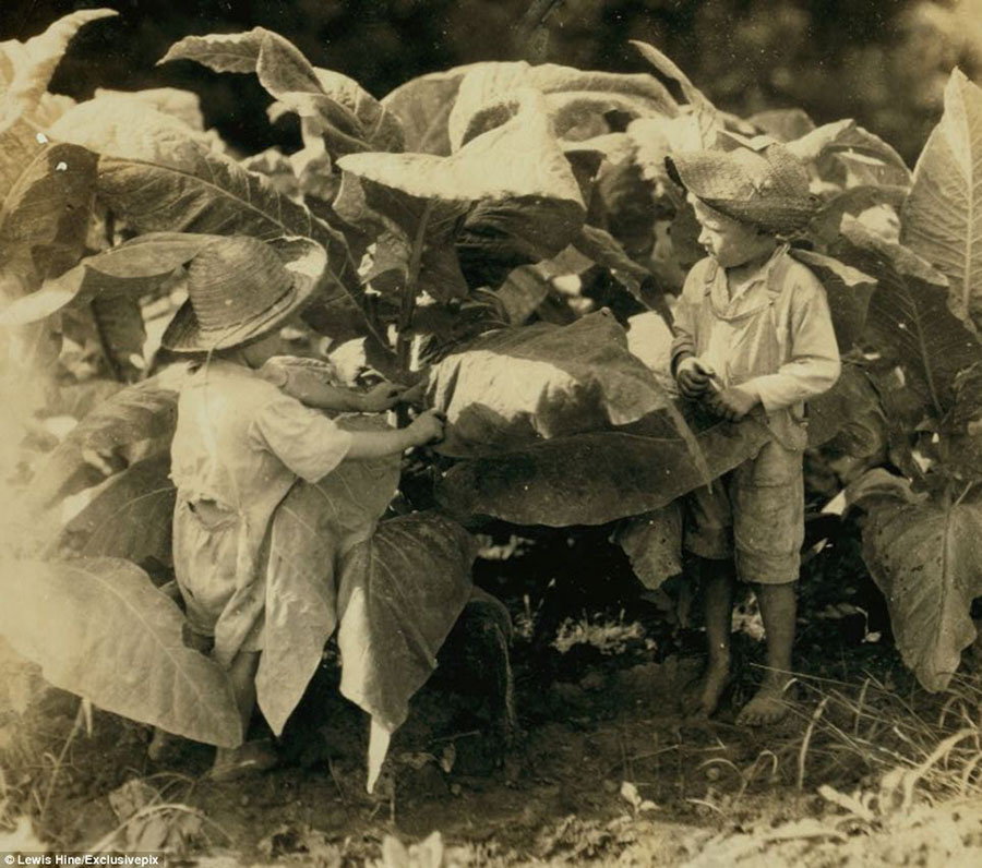 6 yaşındaki Amos ve 4 yaşındaki Horace. Gün boyu tütün tarlasında çalışmak zorunda olduları bir günden.