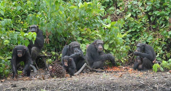 Adada açlığa terk edilen şempanzeler, ellerindeki sınırlı miktardaki yemeklerini de paylaşıyorlar-10
