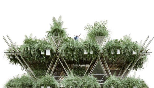 Bambu Şehirleri (1)