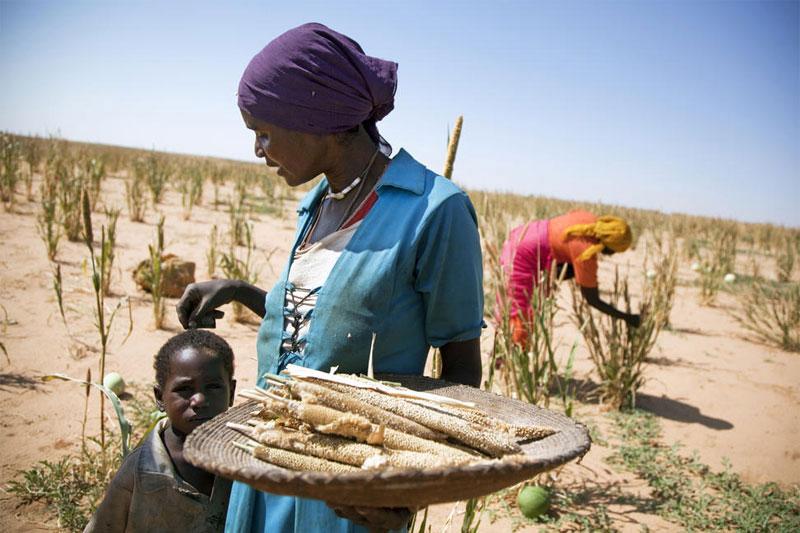 Gıda Adaletsizliği 1