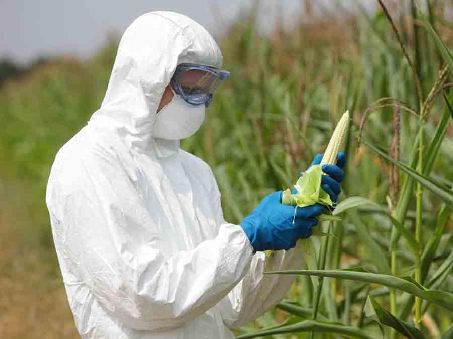 GDO'lu tohumlar ve tohum tanımının değişmesi üzerine 3