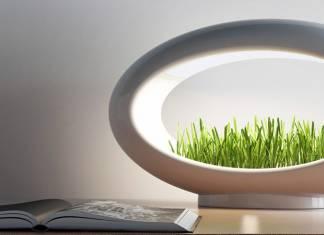 Evde topraksız bitki yetiştirmek mümkün