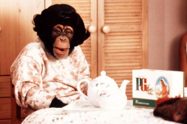 Maymundan insana, insandan maymuna; Şempanze Çarli 6