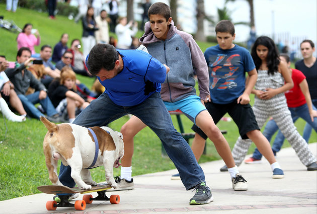 The record for the longest human tunnel travelled through by a dog skateboarder is 30 people and was achieved by Otto the Skateboarding Bulldog in Lima, Peru, in celebration of Guinness World Records Day on 12 November 2015.