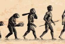 Kayıp çağ ve evrim teorisi