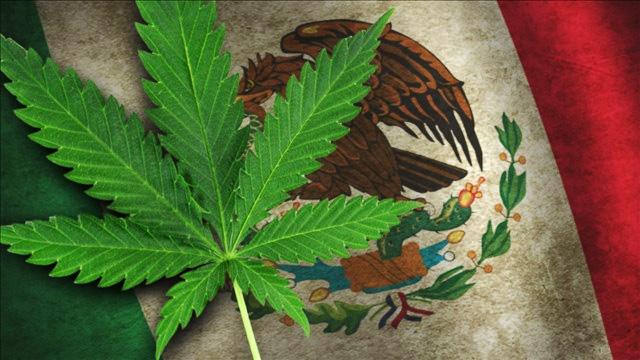 mexico-marijuana1