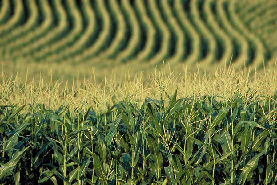 monokültür tarım 2