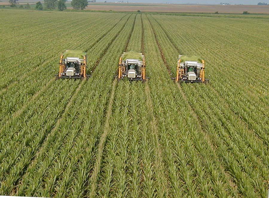 monokültür tarım