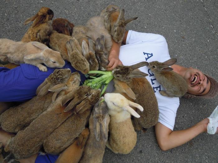 okunoshima-rabbit-island-1