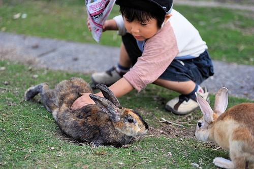 okunoshima-rabbit-island-5
