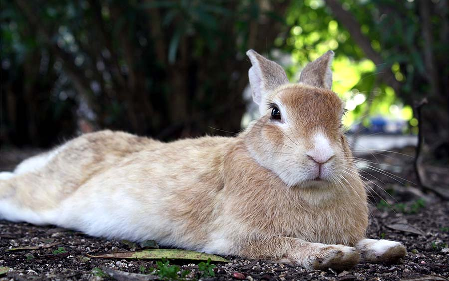 okunoshima-rabbit-island-6