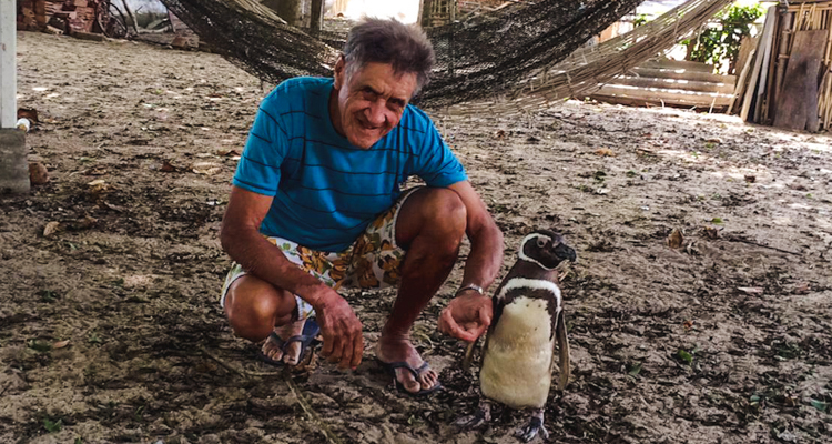 1_penguin-and-the-70-year-old-man