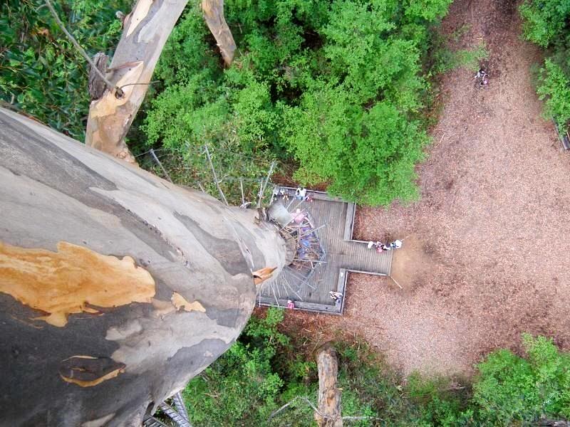 Ağaç tırmanışı, 360 derece video 5