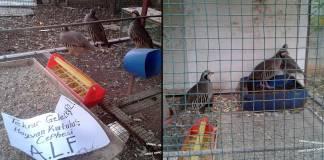 """Hayvan özgürlükçülerinden """"özgürlük eylemi"""": 3 keklik doğasına kavuşturuldu"""