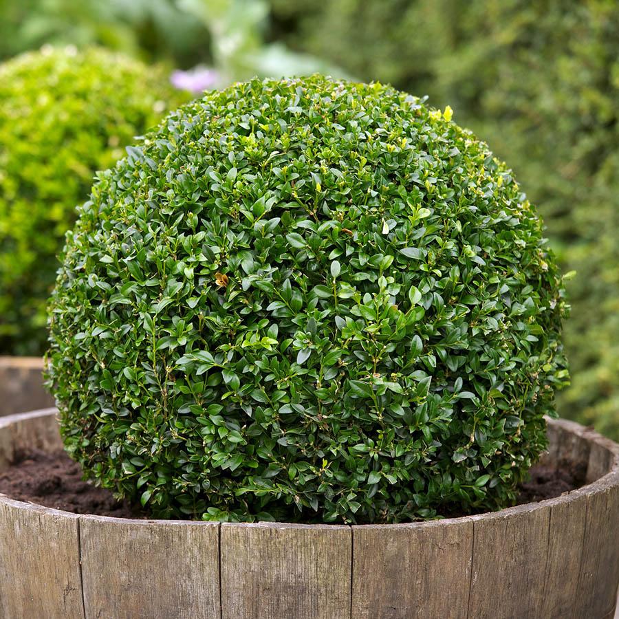 yaşam alanımızdaki bazı bitkiler zehirli olabilir