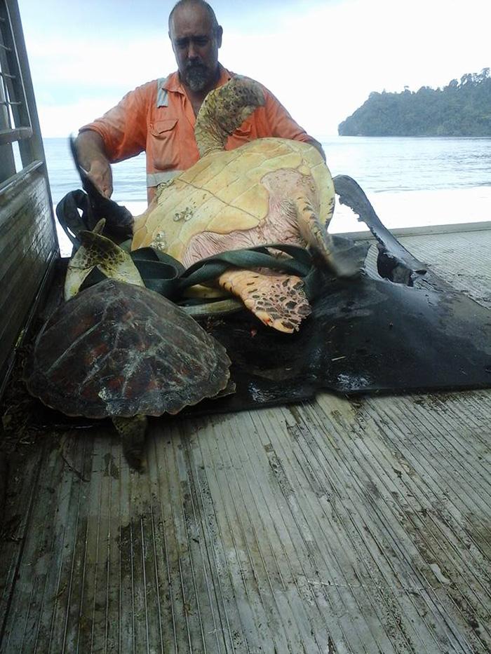 Kaplumbağa kurtarıcıları 1