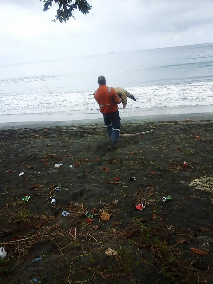 Kaplumbağa kurtarıcıları 2