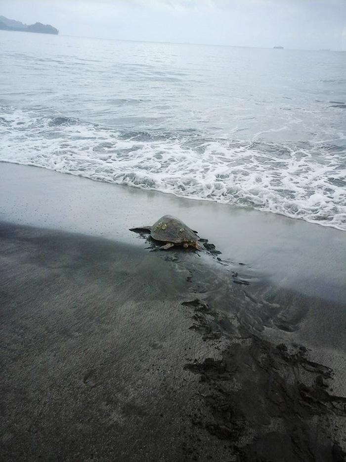 Kaplumbağa kurtarıcıları 3