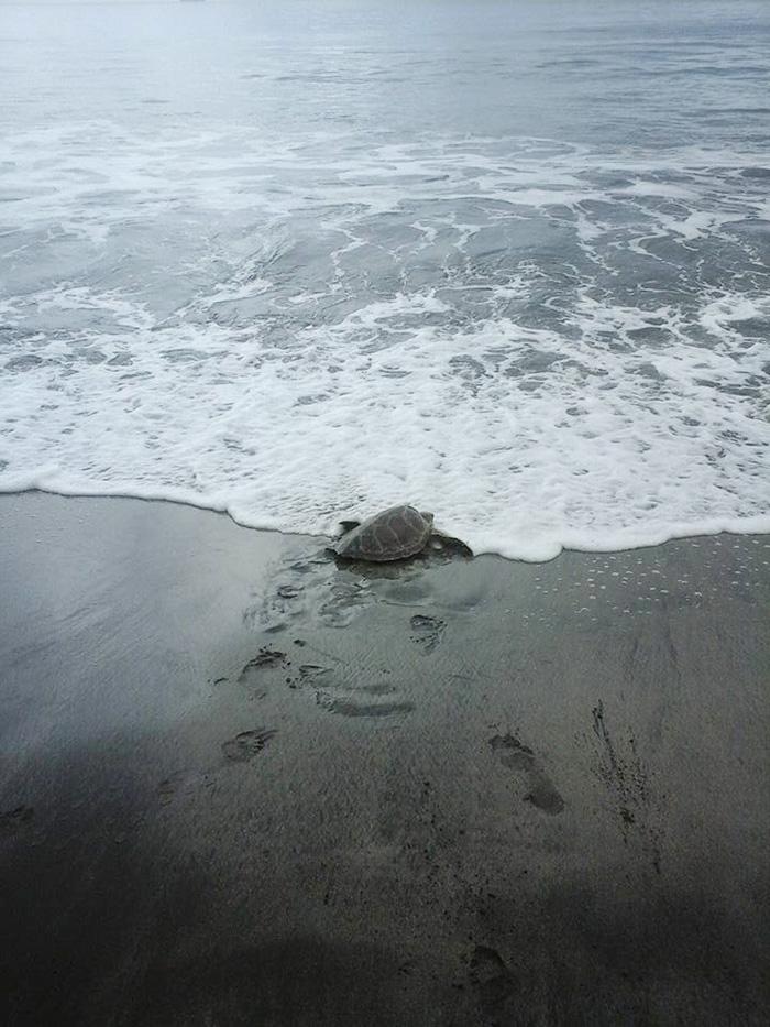 Kaplumbağa kurtarıcıları 4