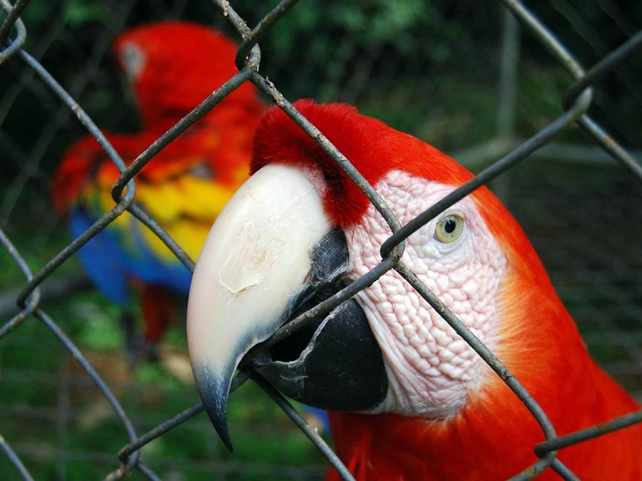 Kosta Rika Hayvanat Bahçesi 3