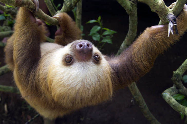 Kosta Rika Hayvanat Bahçesi 4