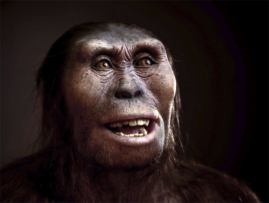 Lucy Hominid