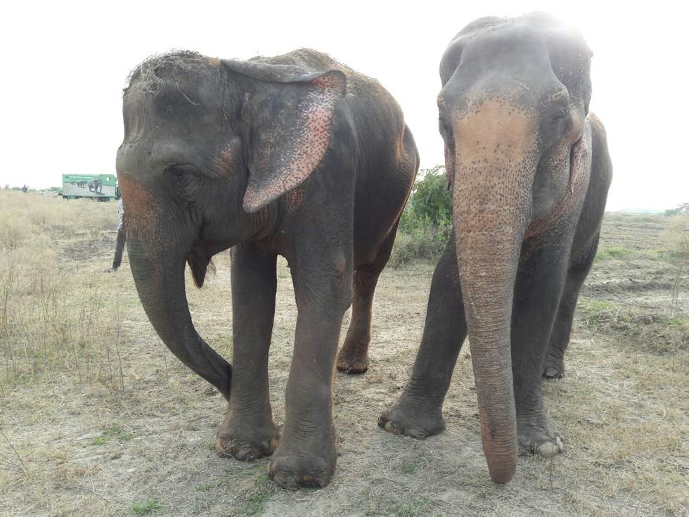 Mia ve Sita: Esaret altında geçen sirk yaşantısı ardından özgürlük naraları