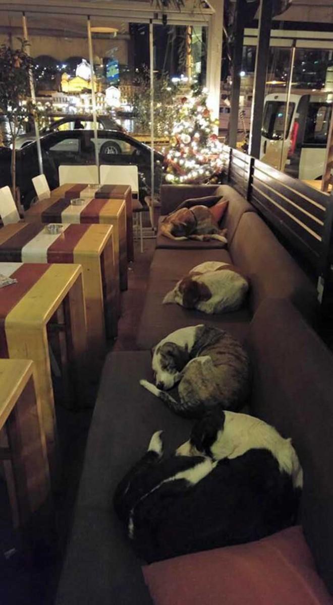#11 Geceleri kapılarını sokak köpeklerine uyumaları için açan kahve dükkanı