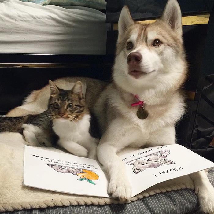 3 Sibirya Kurdu ve Kedi 11