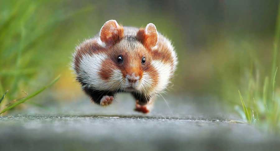 """WINNER Comedy Wildlife Photography Awards  Gülümsemeye ihtiyacımız var. Komik vahşi yaşam fotoğraf yarışmasından """"en komik"""" 13 fotoğraf Komik Vahs CC A7i Yas CC A7am Foto 11"""