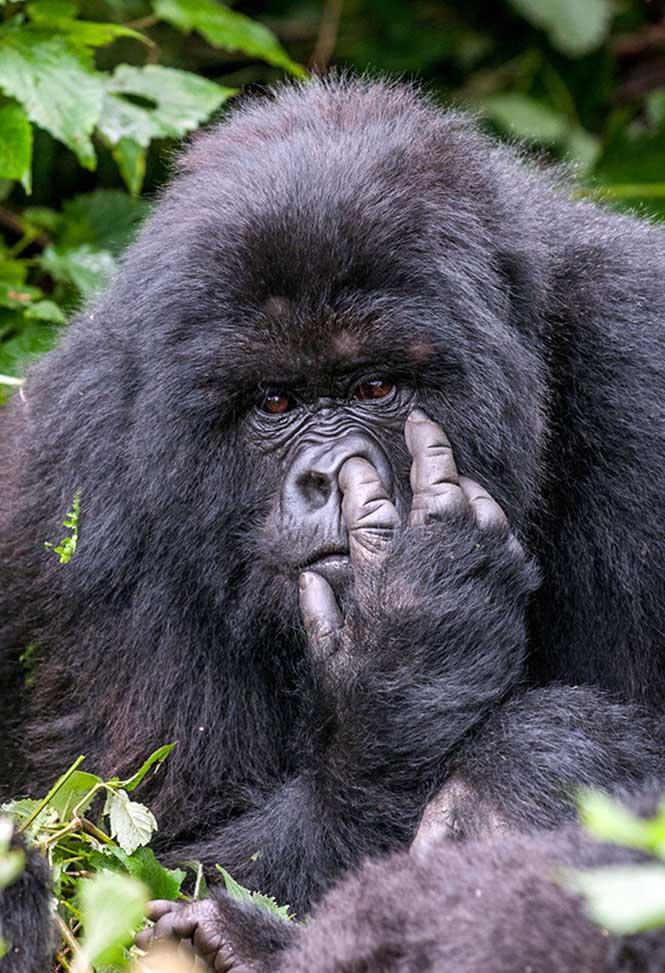 """BRONZE Runner up Comedy Wildlife Photography Awards  Gülümsemeye ihtiyacımız var. Komik vahşi yaşam fotoğraf yarışmasından """"en komik"""" 13 fotoğraf Komik Vahs CC A7i Yas CC A7am Foto 3"""