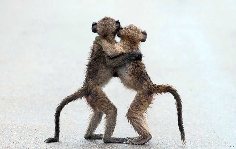 """HIGHLY COMMENDED Comedy Wildlife Photography Awards  Gülümsemeye ihtiyacımız var. Komik vahşi yaşam fotoğraf yarışmasından """"en komik"""" 13 fotoğraf Komik Vahs CC A7i Yas CC A7am Foto 5"""