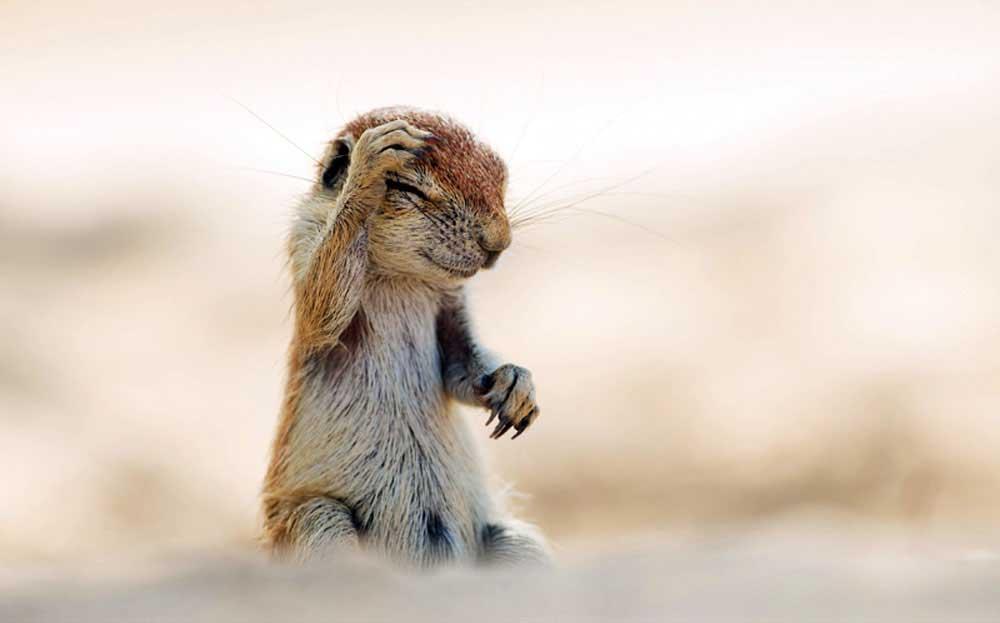 """HIGHLY COMMENDED Comedy Wildlife Photography Awards  Gülümsemeye ihtiyacımız var. Komik vahşi yaşam fotoğraf yarışmasından """"en komik"""" 13 fotoğraf Komik Vahs CC A7i Yas CC A7am Foto 6"""