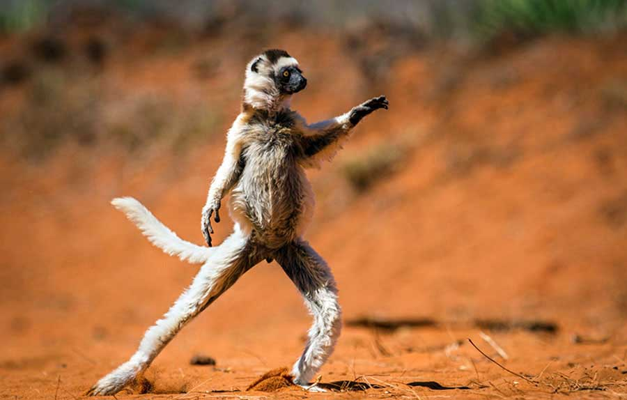 """HIGHLY COMMENDED Comedy Wildlife Photography Awards  Gülümsemeye ihtiyacımız var. Komik vahşi yaşam fotoğraf yarışmasından """"en komik"""" 13 fotoğraf Komik Vahs CC A7i Yas CC A7am Foto 7"""